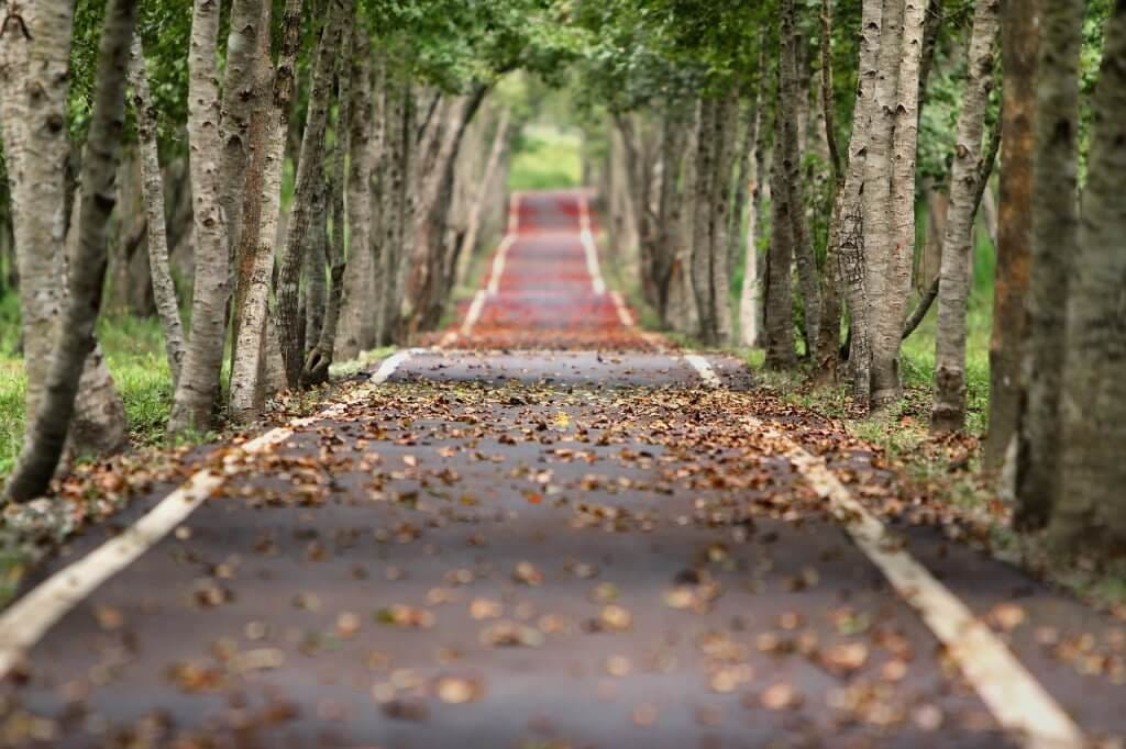 woodland-656969_1280-1024x682.jpg